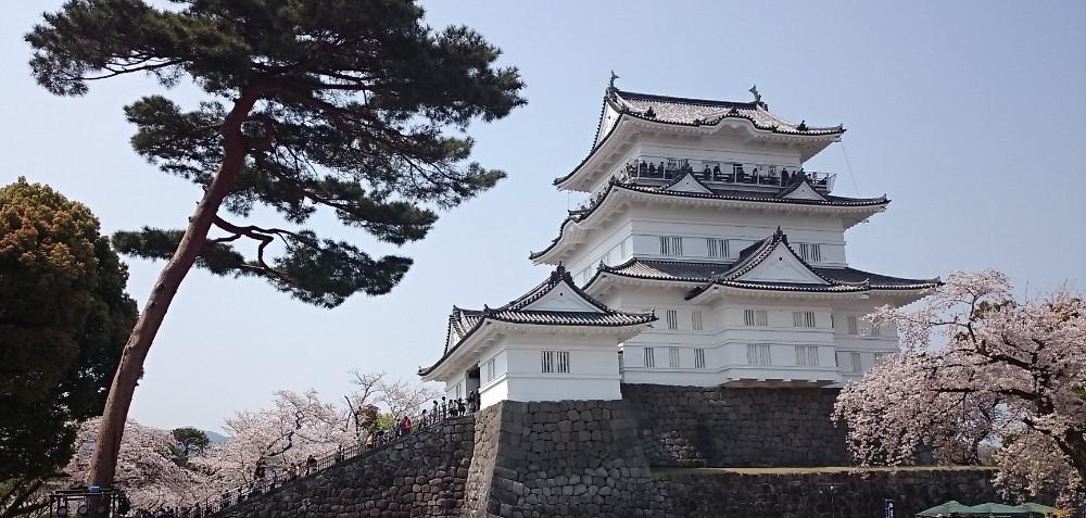 神奈川県小田原市の写真(小田原城)